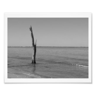 Stands Alone Photo Print