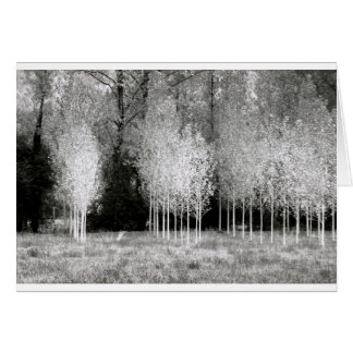Stands of Trees Card