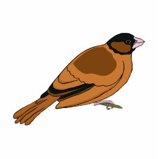 Stanno Sparrow Photo Cutout