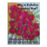 Staph - Evolution by Natural Selec... - Customised Poster