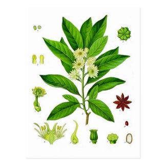 Star Anise Postcard