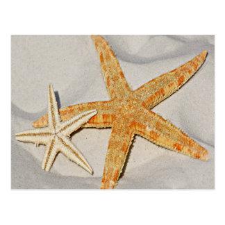 Star Fish at the Beach Postcard