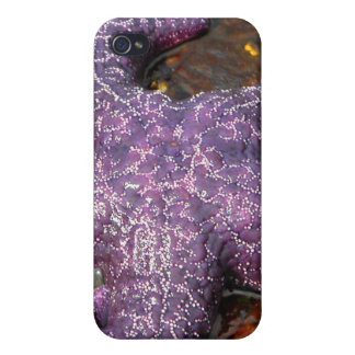 Star Fish Case For The iPhone 4