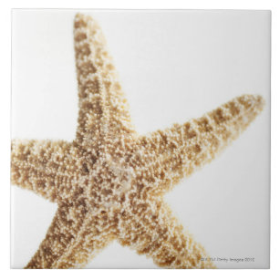 Star fish ceramic tile