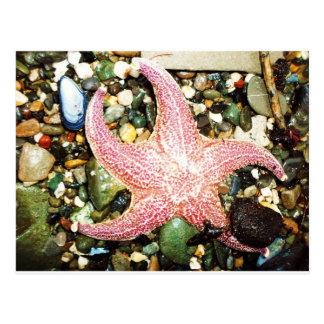 star fish post card