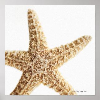 Star fish poster