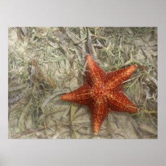 Star Fish Print