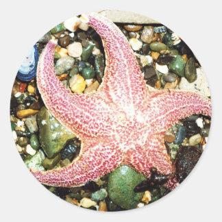 star fish round sticker