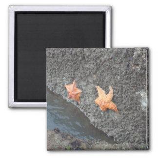 Star Fish Square Magnet