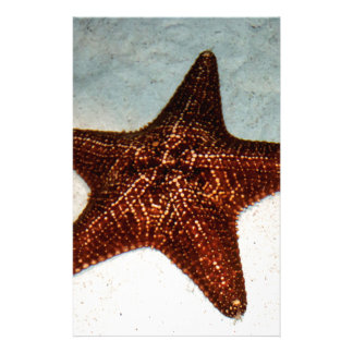 Star Fish Stationery Design