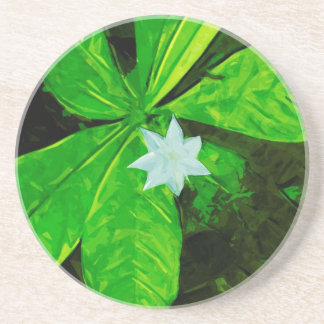 Star Flower a White Wildflower Abstract Beverage Coasters