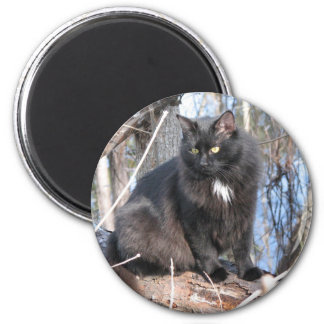Star Noir by Water Refrigerator Magnets