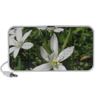 Star of Bethlehem flowers and daisies iPod Speaker