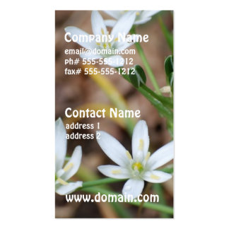 Star of Bethlehem Flowers Business Cards