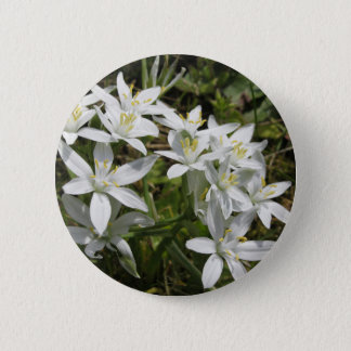 Star of Bethlehem flowers  Ornithogalum umbellatum 6 Cm Round Badge