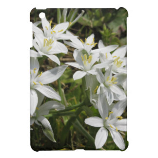 Star of Bethlehem flowers  Ornithogalum umbellatum Case For The iPad Mini