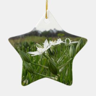 Star of Bethlehem flowers  Ornithogalum umbellatum Ceramic Ornament