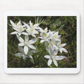 Star of Bethlehem flowers  Ornithogalum umbellatum Mouse Pad