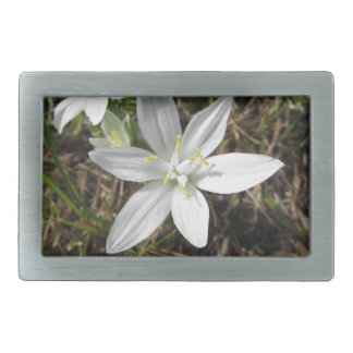 Star of Bethlehem flowers  Ornithogalum umbellatum Rectangular Belt Buckle