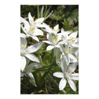 Star of Bethlehem flowers  Ornithogalum umbellatum Stationery