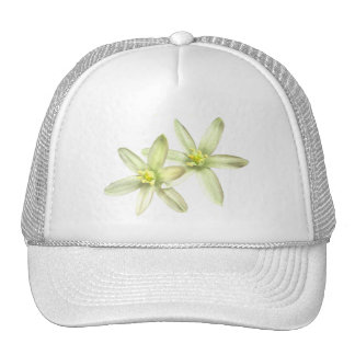 Star of Bethlehem Hat