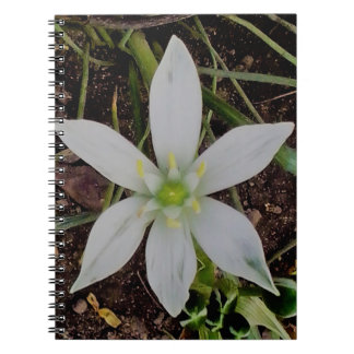 Star OF Bethlehem; Milk star spiral photo note Spiral Notebook