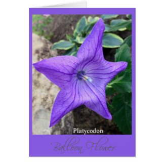 "Star of the Garden ""Platycodon"" Note Card"