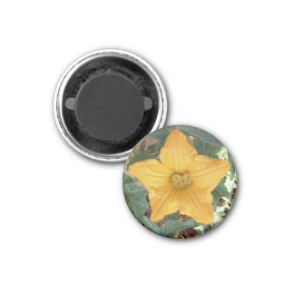 Star shaped flower round magnet