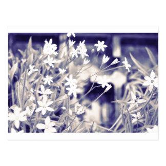 Star-shaped Flowers Sparkle, Postcard