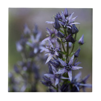 Star swertia (Swertia perennis) Ceramic Tile