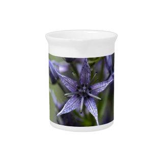 Star swertia (Swertia perennis) Pitcher