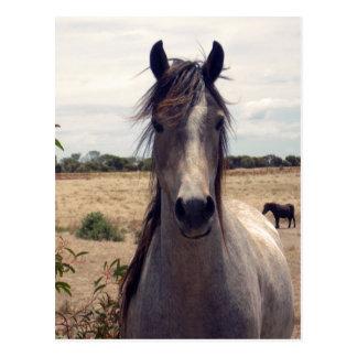 Star_The_Horse,_ Postcard