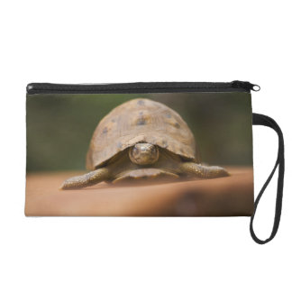 Star tortoise, Perinet Reserve, Madagascar Wristlet Clutches