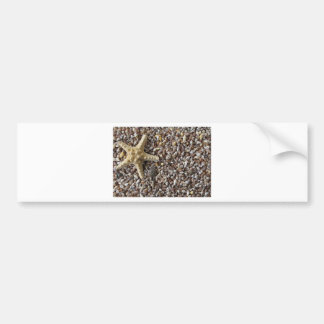 Starfish and seashells bumper sticker