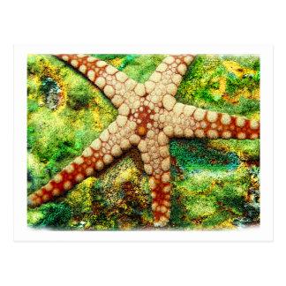 Starfish Aquatic Animal Digital Art -JungleWalk Postcard