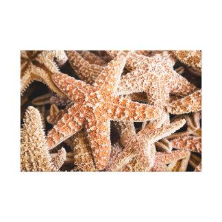 Starfish Grouping Canvas Canvas Print