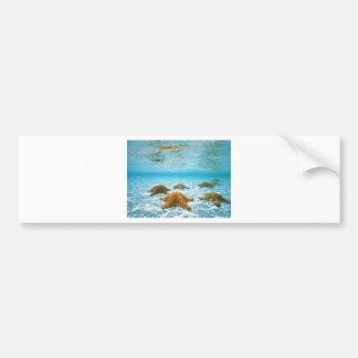 starfish island.jpg bumper sticker