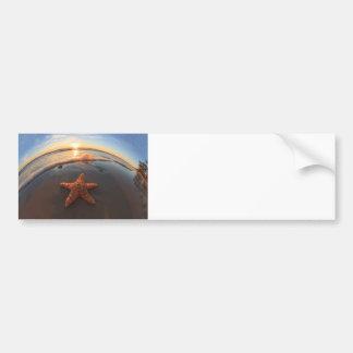 Starfish on Beach at Sunset Bumper Sticker