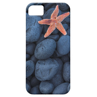 Starfish On Black Rocks Along The Coast | Iceland Case For The iPhone 5