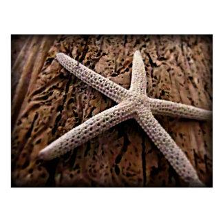 Starfish on Driftwood Postcard