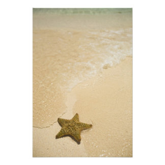 Starfish on sandy beach, Gibbs Cay Land and Art Photo