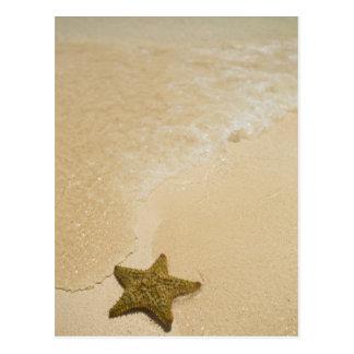 Starfish on sandy beach, Gibbs Cay Land and Postcard