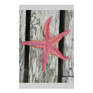 Starfish on wood stationery