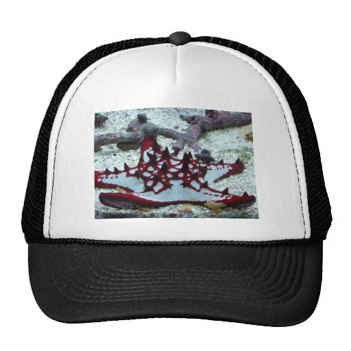 starfish,red and white hat