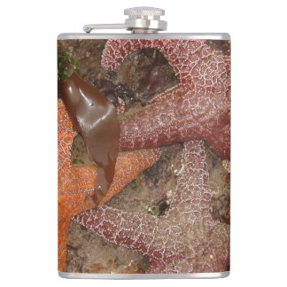 Starfish/Sea Stars in Cannon Beach, OR, Photo 4 Hip Flask