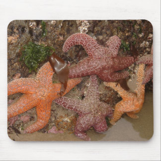 Starfish/Sea Stars in Cannon Beach, OR, Photo 4 Mouse Pad