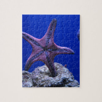 Starfish, Star Bright! Jigsaw Puzzle