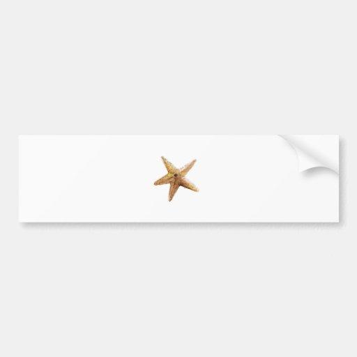 Starfish starfishes design paiting bumper stickers