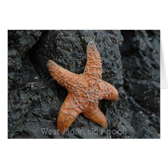 Starfish, West Marin tide pools Card