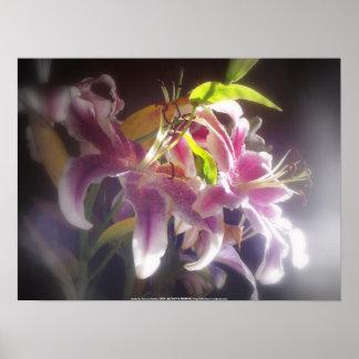 Stargazer Lilies #20 Poster
